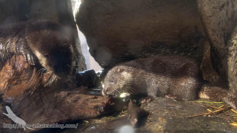 f:id:otters_yvonne:20190201125425j:plain