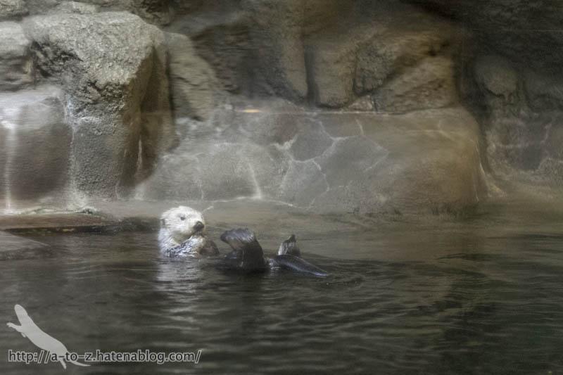 f:id:otters_yvonne:20190201234633j:plain