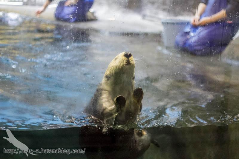 f:id:otters_yvonne:20190201234638j:plain