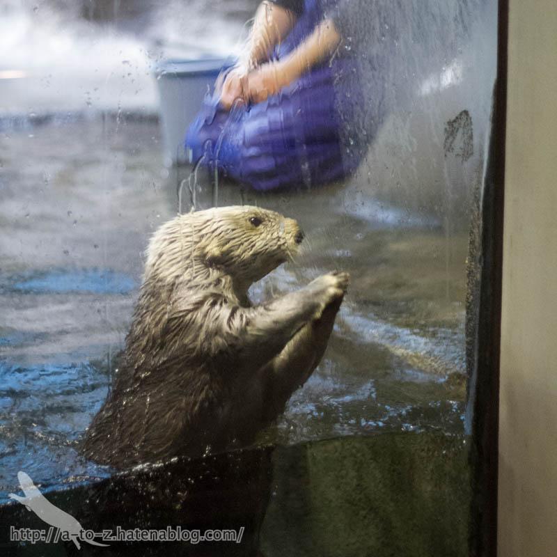 f:id:otters_yvonne:20190201234640j:plain