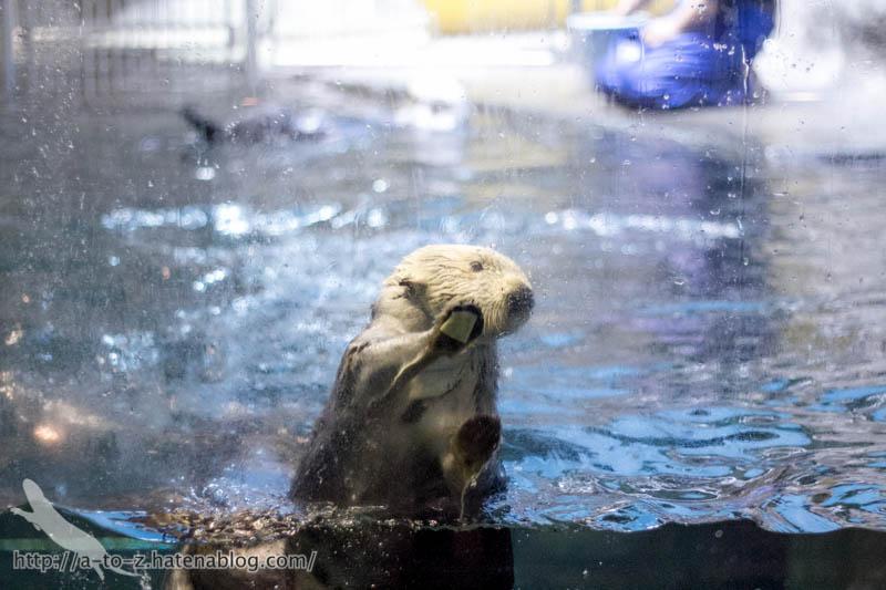 f:id:otters_yvonne:20190201234652j:plain