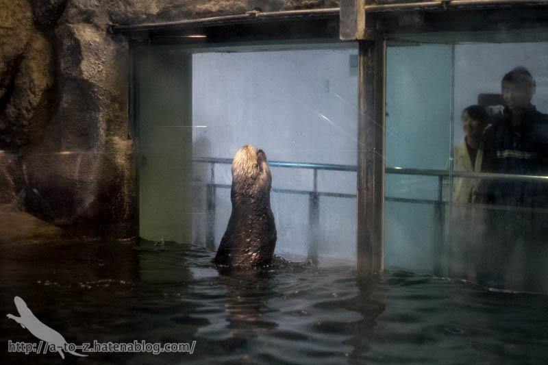 f:id:otters_yvonne:20190201234655j:plain