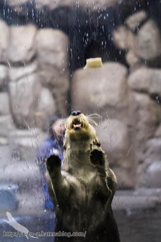 f:id:otters_yvonne:20190201234658j:plain