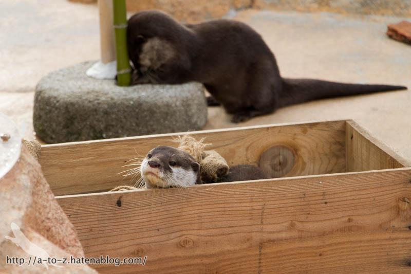 f:id:otters_yvonne:20190411201943j:plain