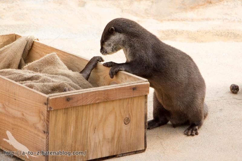 f:id:otters_yvonne:20190411201945j:plain