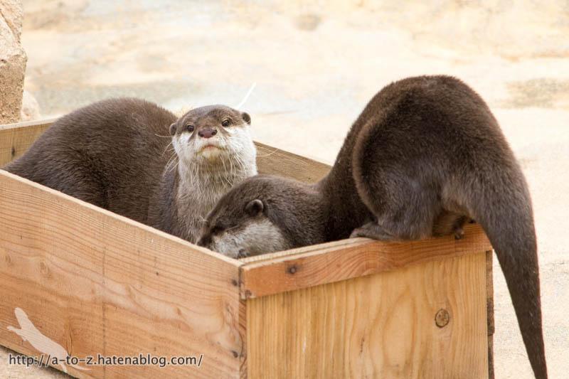 f:id:otters_yvonne:20190411201948j:plain
