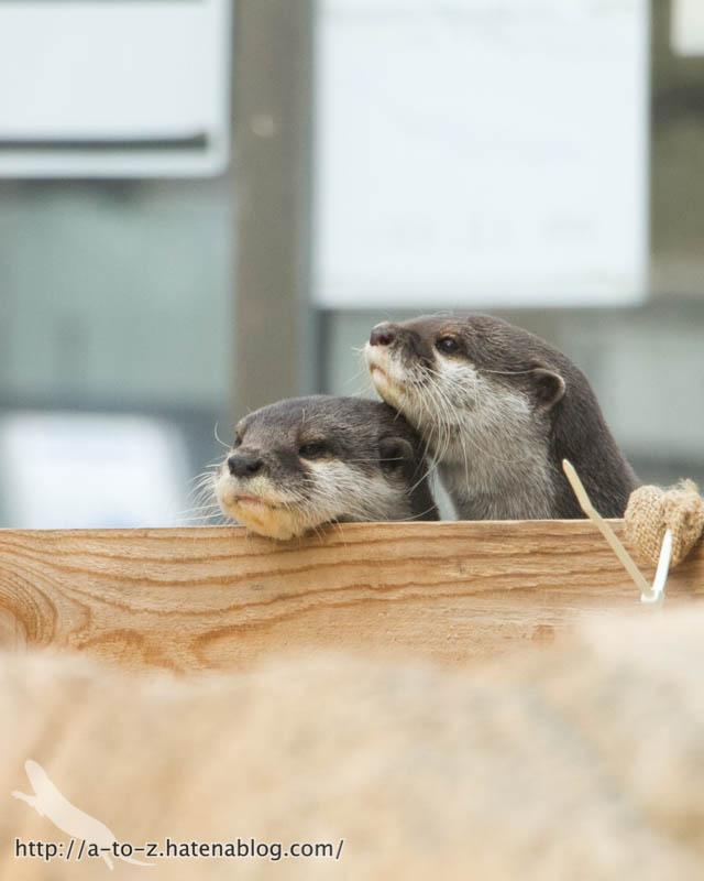 f:id:otters_yvonne:20190411201950j:plain