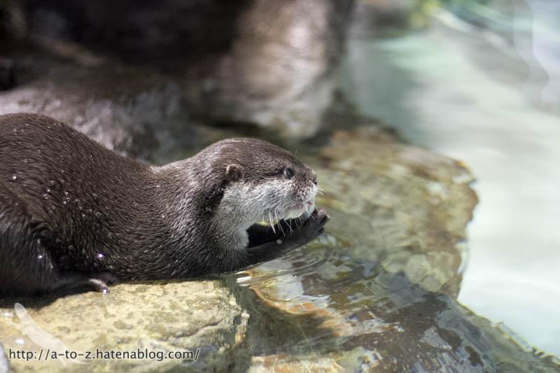 f:id:otters_yvonne:20190502001114j:plain
