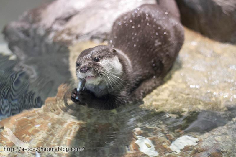 f:id:otters_yvonne:20190502001115j:plain