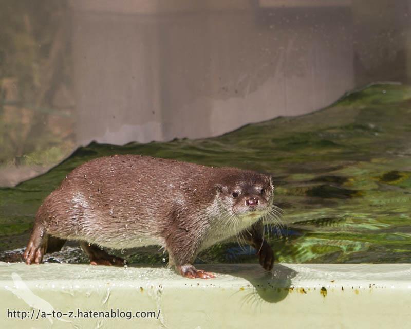 f:id:otters_yvonne:20190710224123j:plain
