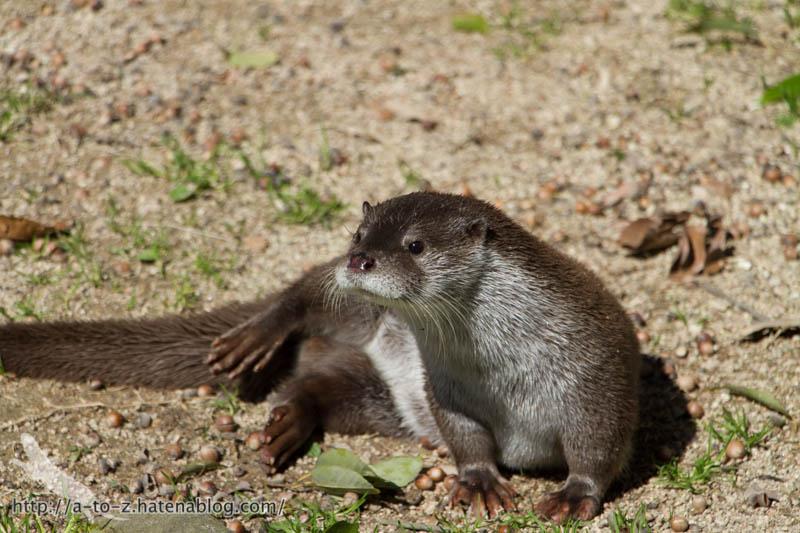 f:id:otters_yvonne:20190710224220j:plain