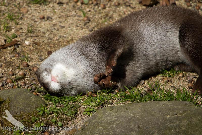 f:id:otters_yvonne:20190710224226j:plain