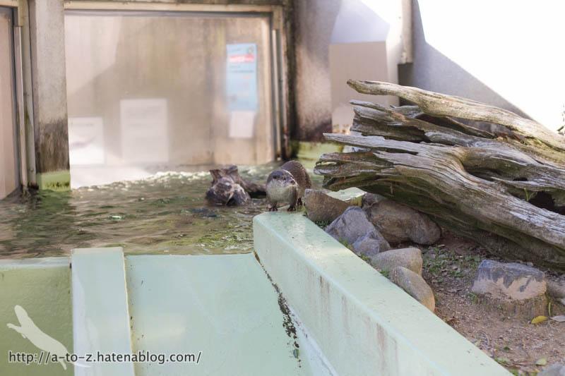 f:id:otters_yvonne:20190710224306j:plain