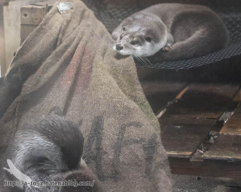 f:id:otters_yvonne:20190710224310j:plain