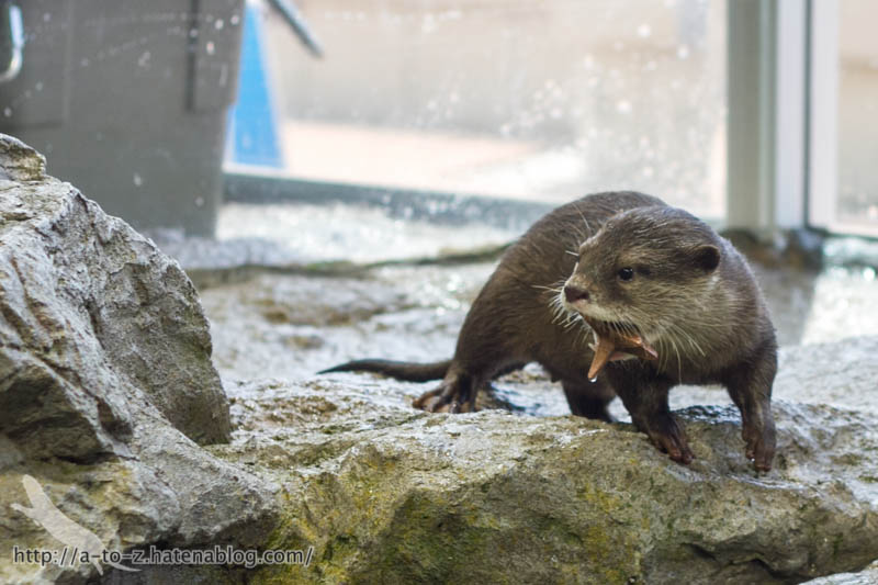 f:id:otters_yvonne:20190927201933j:plain