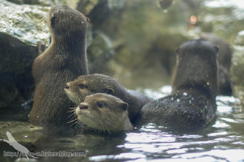f:id:otters_yvonne:20190927201947j:plain