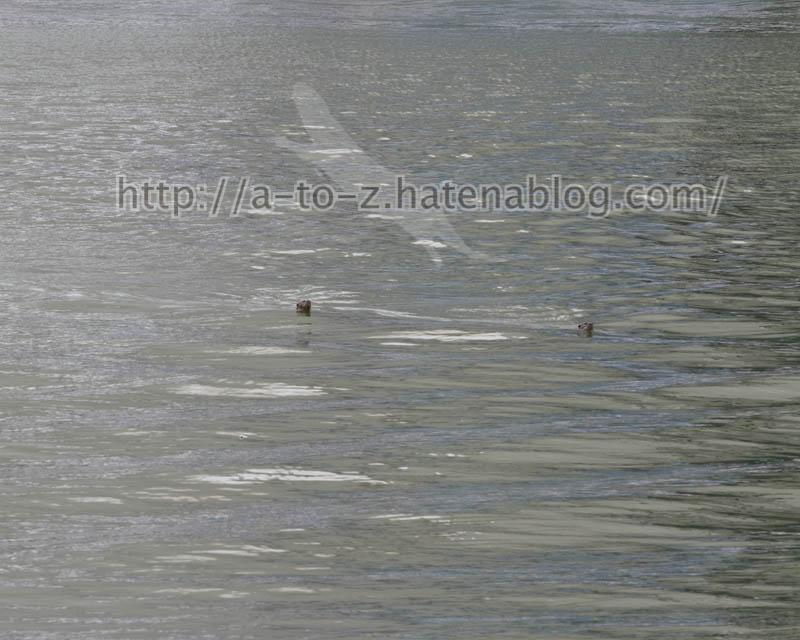 f:id:otters_yvonne:20191226170312j:plain