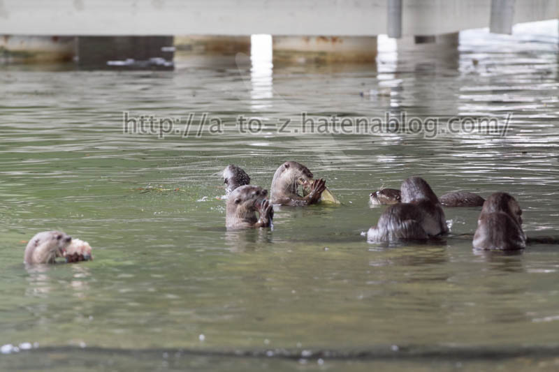 f:id:otters_yvonne:20191226170326j:plain