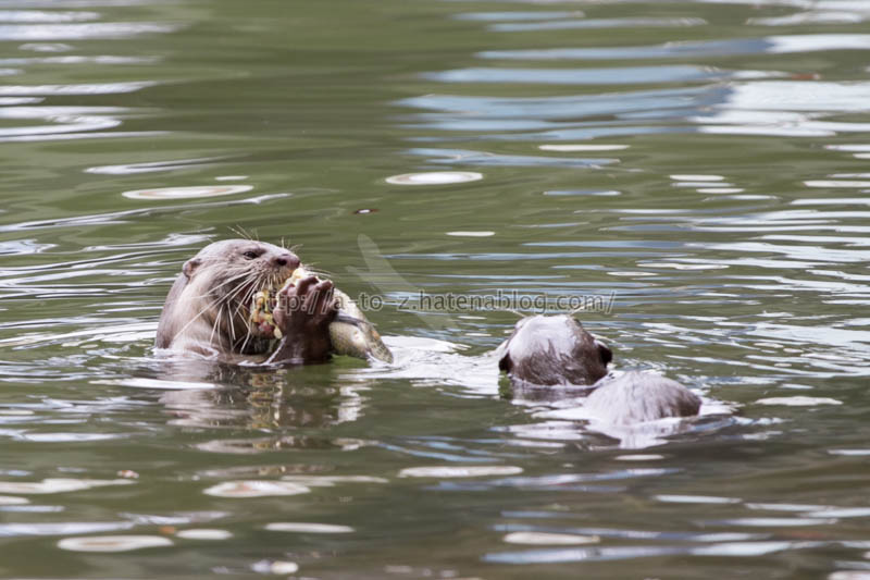 f:id:otters_yvonne:20191226170347j:plain