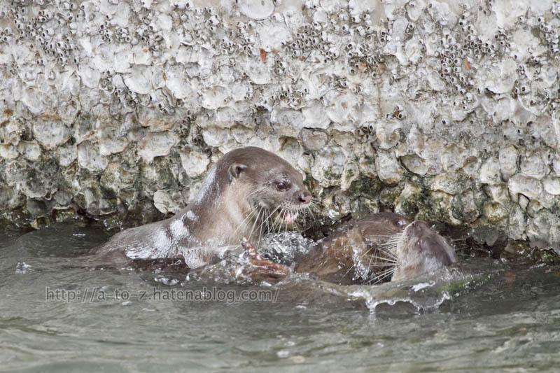 f:id:otters_yvonne:20191226170407j:plain