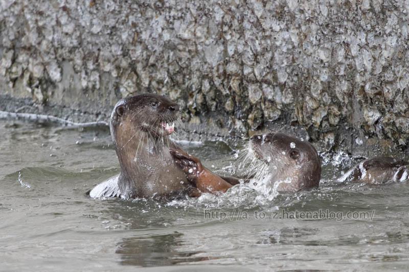 f:id:otters_yvonne:20191226170411j:plain