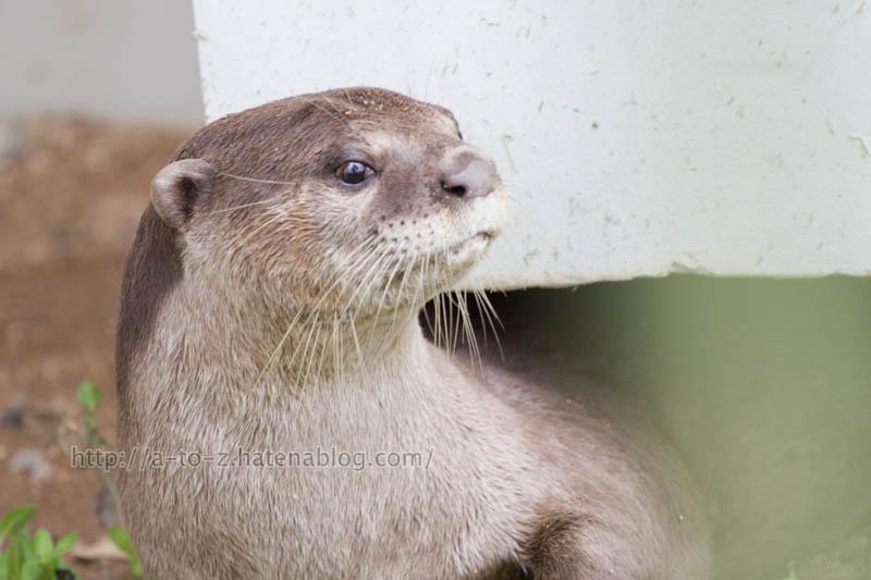 f:id:otters_yvonne:20191226170427j:plain