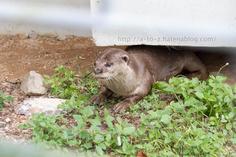 f:id:otters_yvonne:20191226170435j:plain
