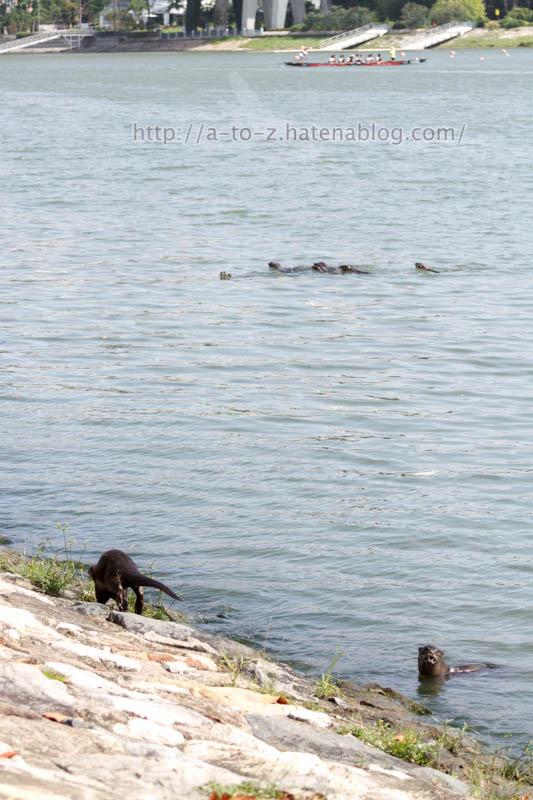 f:id:otters_yvonne:20200105201014j:plain