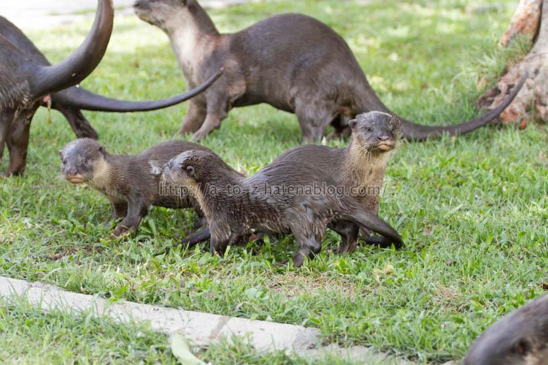 f:id:otters_yvonne:20200105201032j:plain