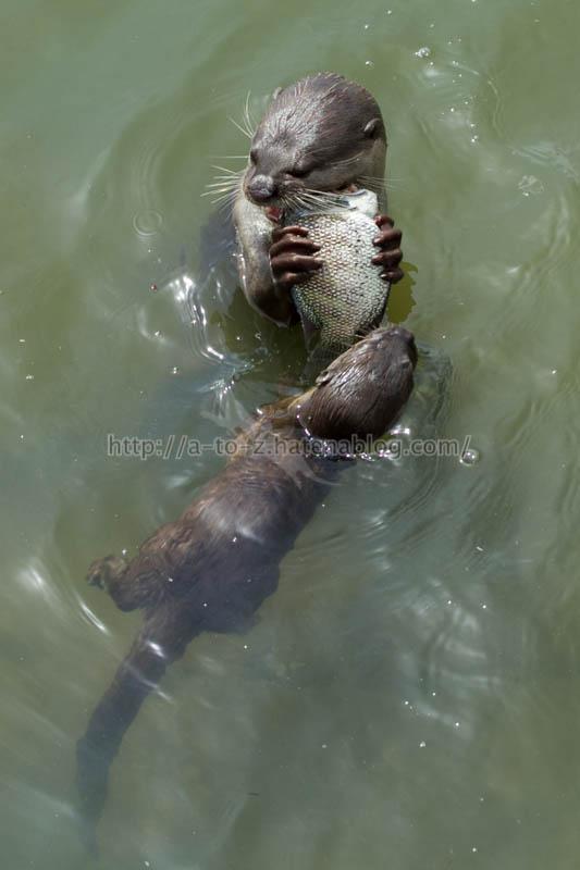 f:id:otters_yvonne:20200105201105j:plain