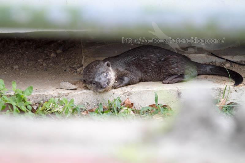 f:id:otters_yvonne:20200105201130j:plain