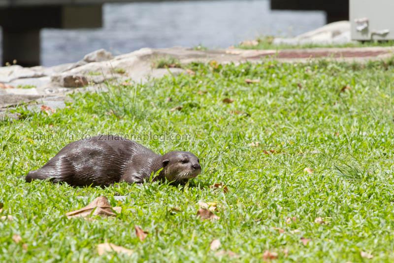 f:id:otters_yvonne:20200105201140j:plain