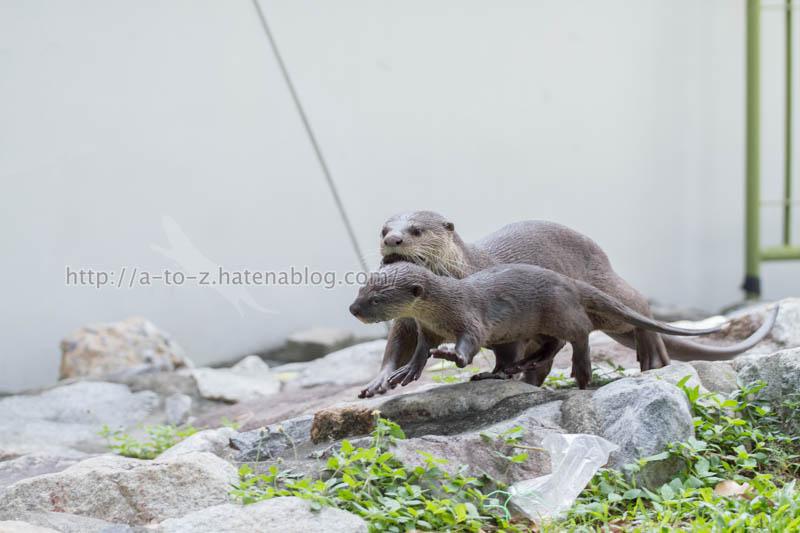 f:id:otters_yvonne:20200105201150j:plain