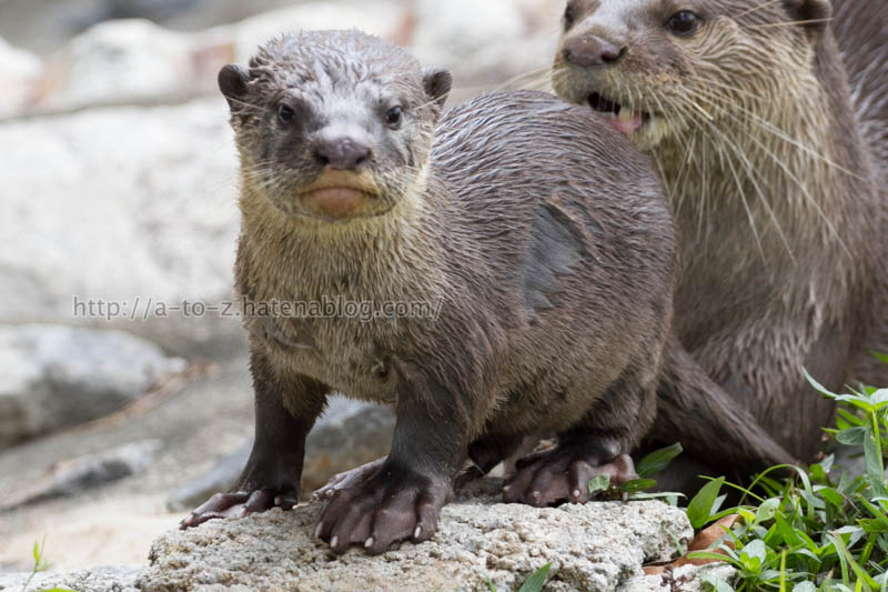 f:id:otters_yvonne:20200105201155j:plain