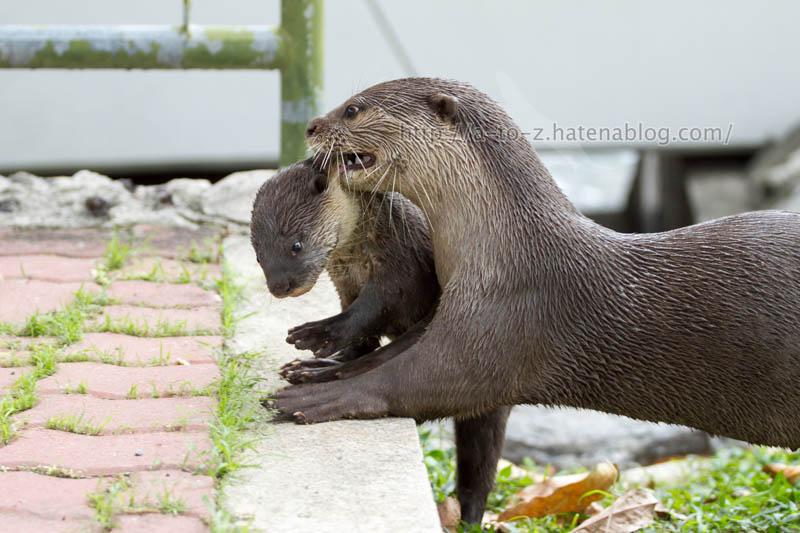 f:id:otters_yvonne:20200105201159j:plain