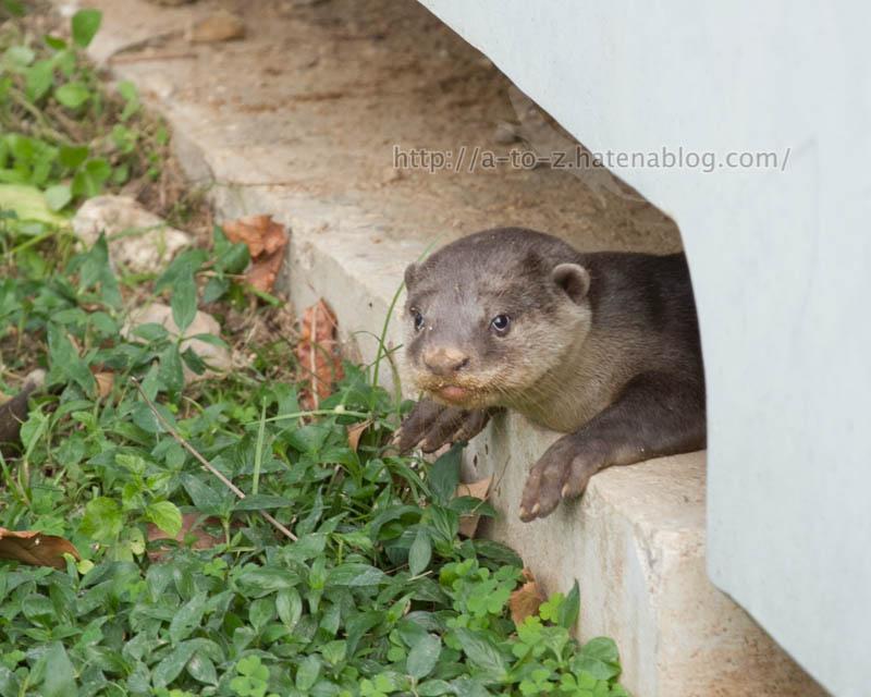 f:id:otters_yvonne:20200105201228j:plain