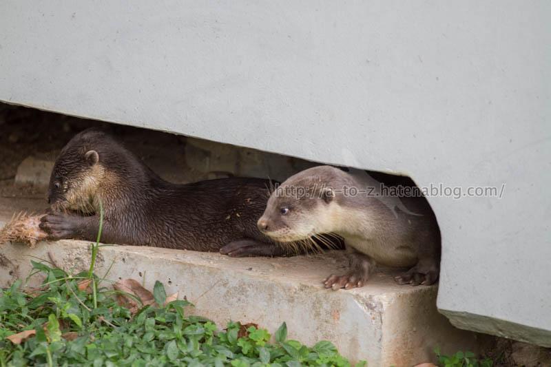 f:id:otters_yvonne:20200105201242j:plain