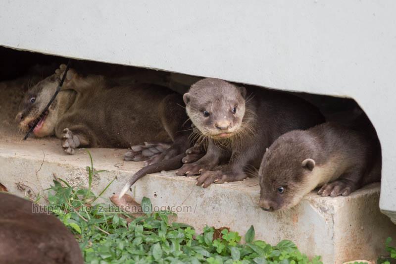 f:id:otters_yvonne:20200105201259j:plain