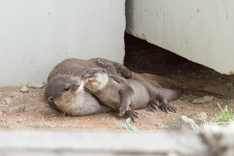 f:id:otters_yvonne:20200105201304j:plain