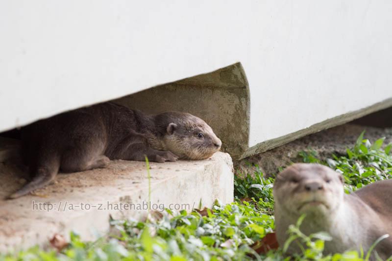 f:id:otters_yvonne:20200105201314j:plain