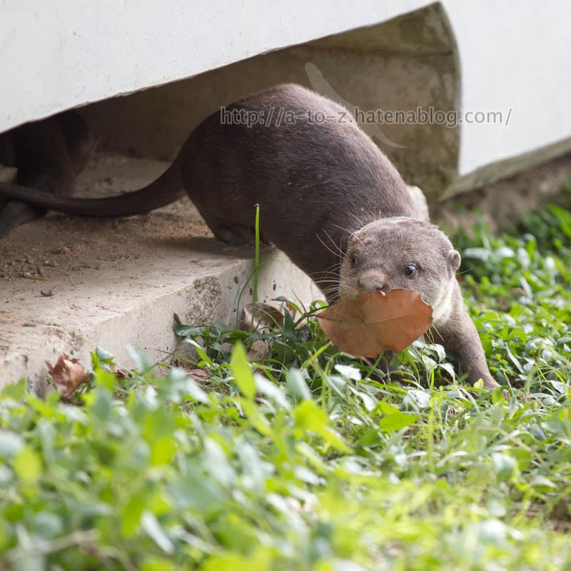 f:id:otters_yvonne:20200105201318j:plain