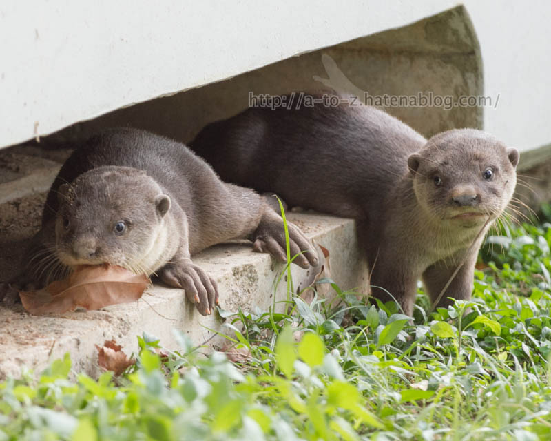 f:id:otters_yvonne:20200105201323j:plain