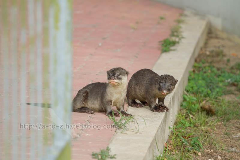 f:id:otters_yvonne:20200105201350j:plain