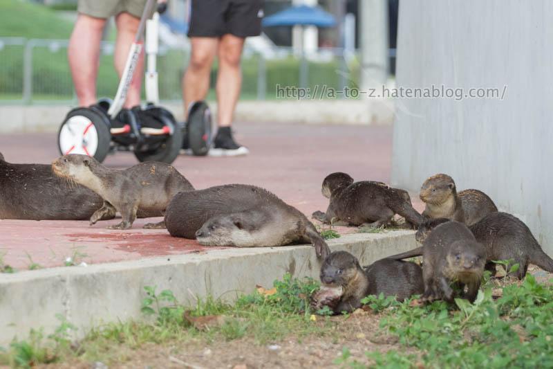 f:id:otters_yvonne:20200105201400j:plain