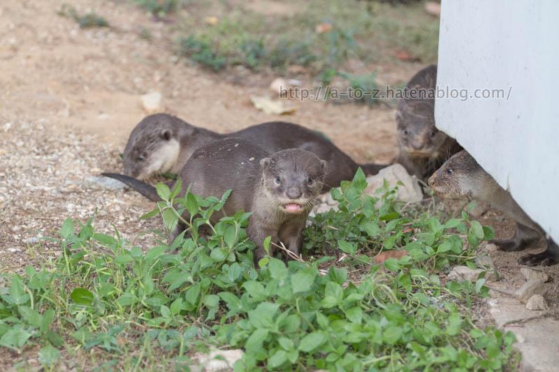 f:id:otters_yvonne:20200105201405j:plain