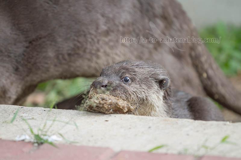 f:id:otters_yvonne:20200105201411j:plain