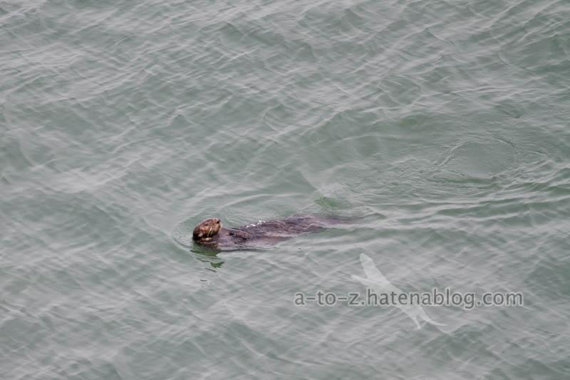 f:id:otters_yvonne:20200918170115j:plain