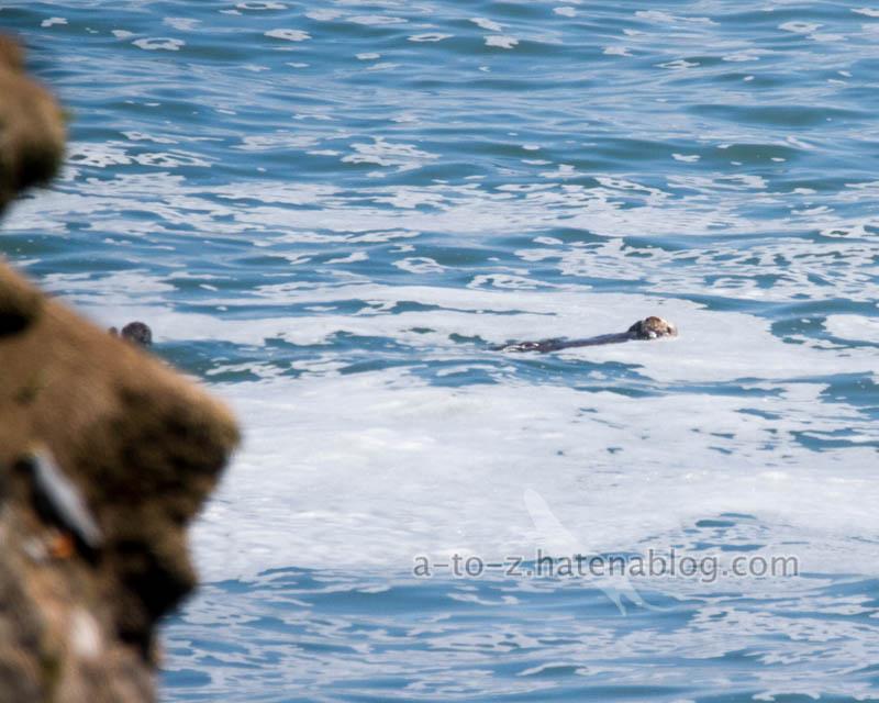 f:id:otters_yvonne:20200918170219j:plain
