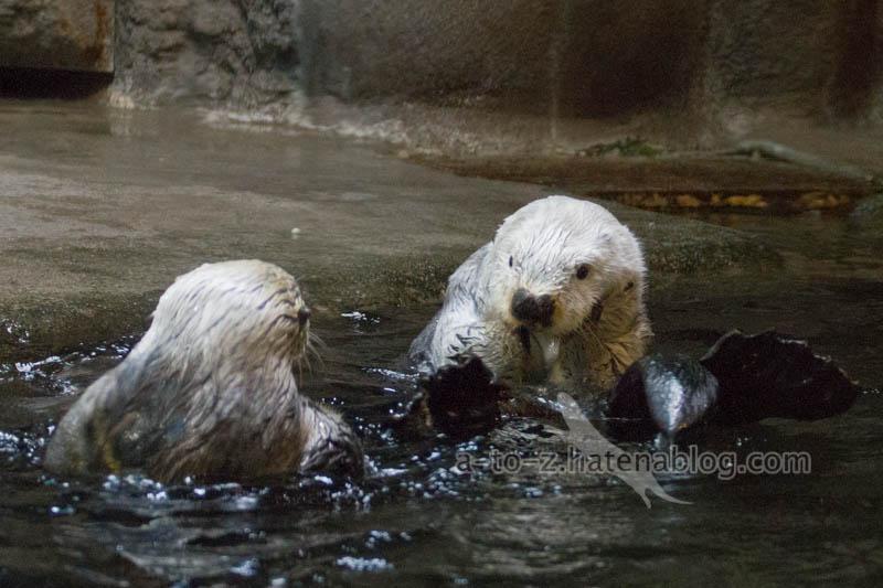 f:id:otters_yvonne:20201016191226j:plain