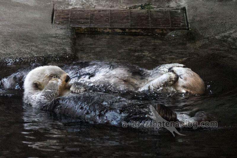 f:id:otters_yvonne:20201016191239j:plain
